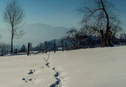 Urme pe zapada – iarna 2014