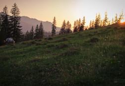 Asfințit la pășune – Bucovina 2017