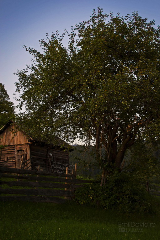 Seară de vară la țară, Bucovina